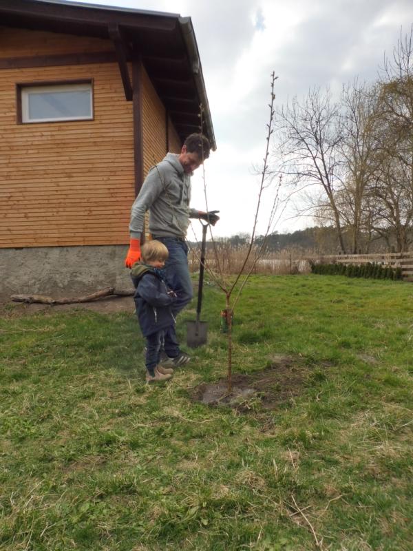 Ein Kirschbaum für Theo