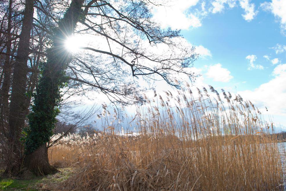 Schilf-Haus-Am-Bauernsee