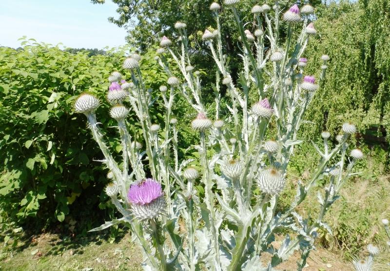 Wildwuchs Bouquet im Garten