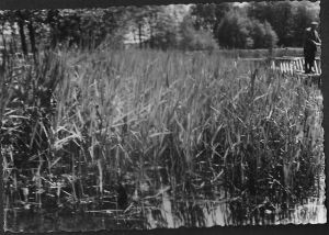 Angelverein-Dobbrikow-Angler-auf-Steg