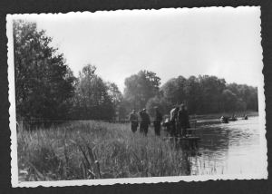Angler-Schilf
