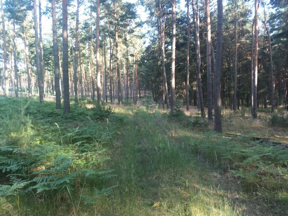 Wald bei Dobbrikow
