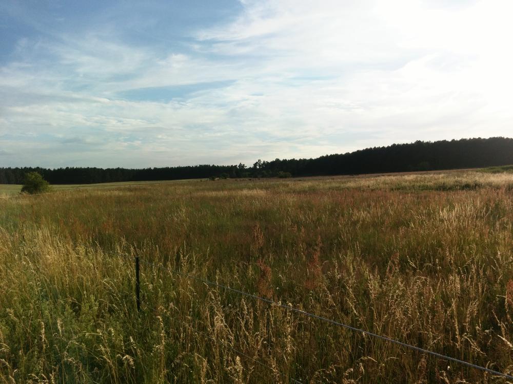 Weide bei Nettgendorf
