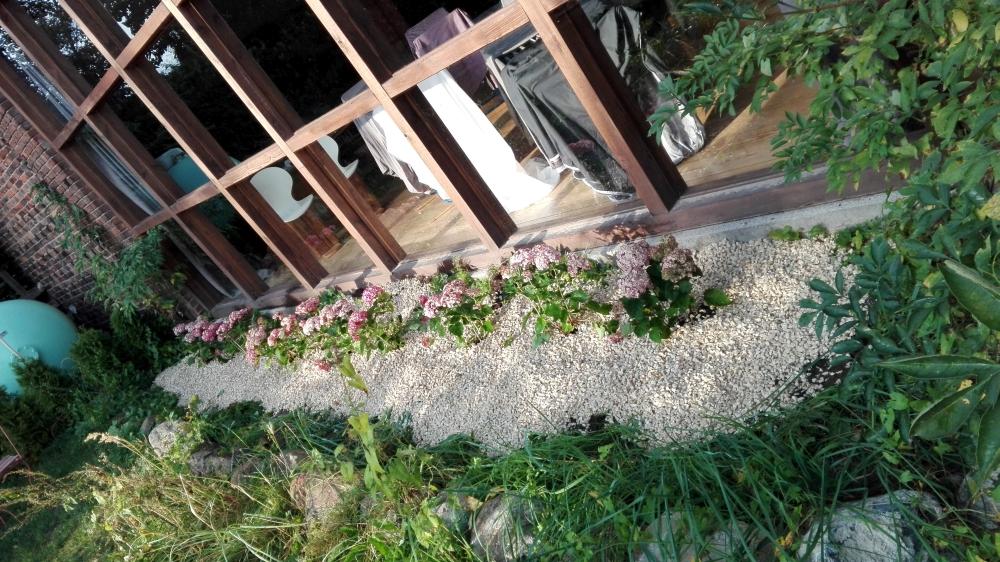 Hortensien vor der Scheune