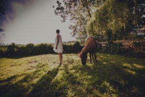 Pferd im Garten