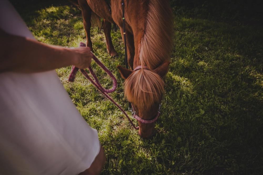 Pferd vom Moorhof