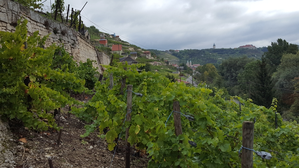 Weintour Saale-Unstrut