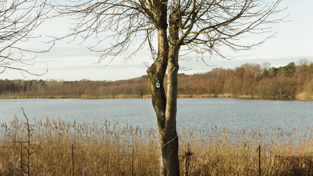 Der Bauernsee im Februar