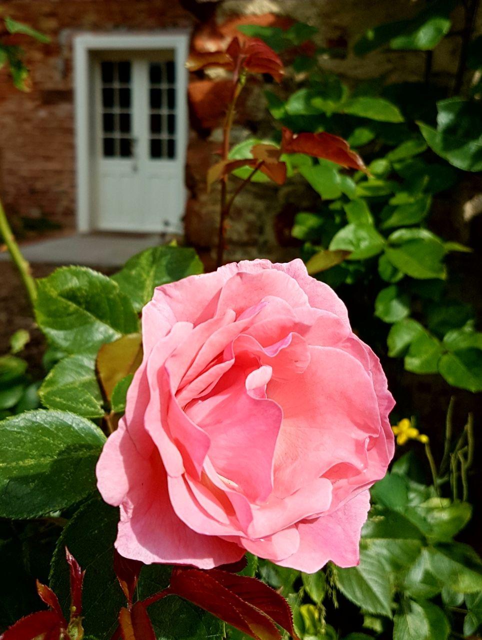 Bilder aus dem Garten